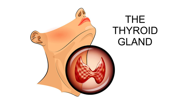 Your Thyroid Gland Small But Mighty Atlas Chiropractic P C